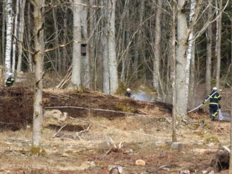 brand_skogochmark