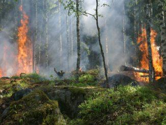 skogsbrand_stockbild