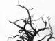 Gammalt träd. Genrebild.